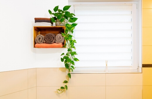 Pothos is a favourite when choosing the best bathroom plants as this plant loves low light and humidity